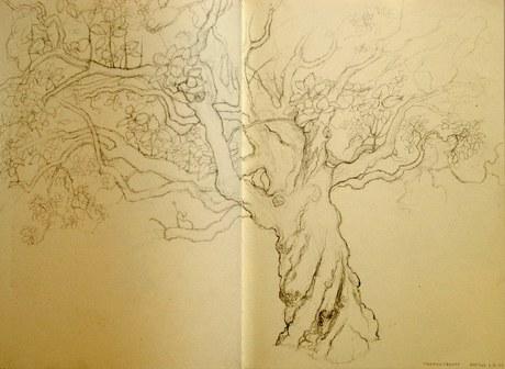 Trumpet tree (sketch)