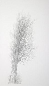 Elm - winter