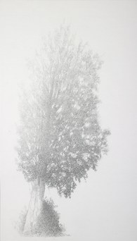 Elm in the fog - summer