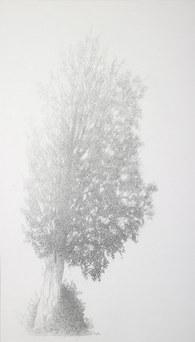 Elm in the fog - summer