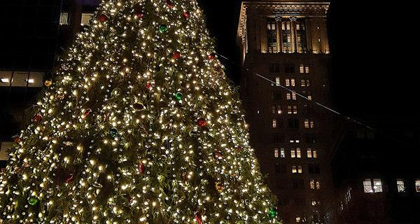 Boston Christmas Trees