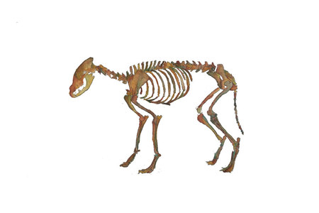 Skeletons/Skelentines