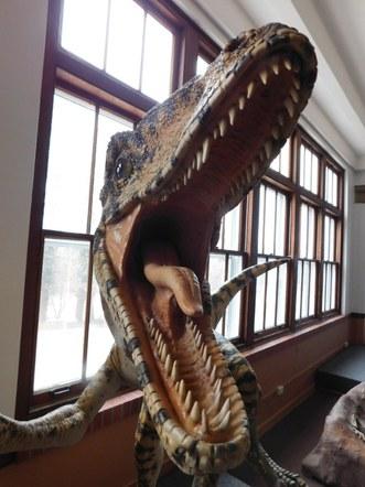 Dinosaur Delight