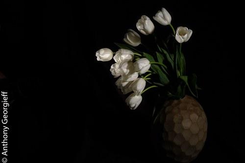 Flower No. 7