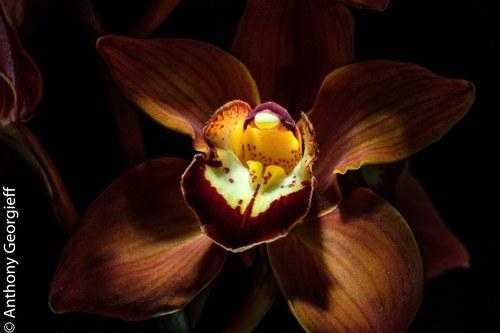 Flower No. 9