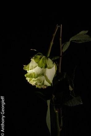 Flower No. 12