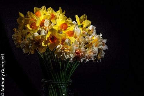 Flower No. 13