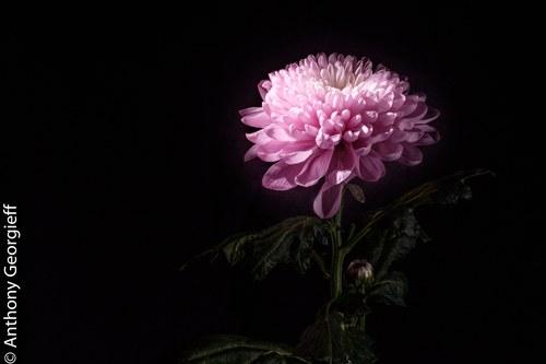 Flower No. 17