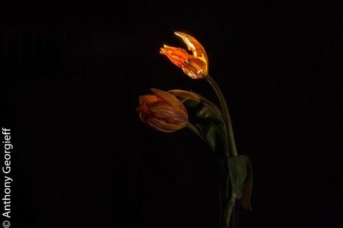 Flower No. 19