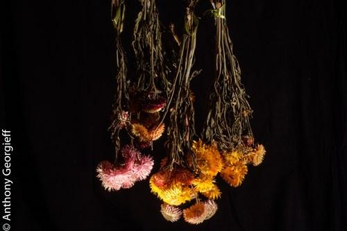 Flower No. 35