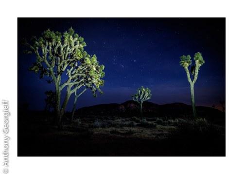 Joshua Trees, Cali