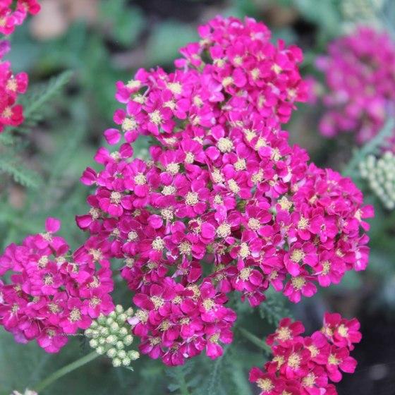 Photography: Herbals and Medicinals